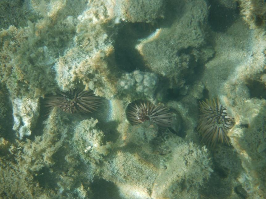 Snorkeling off the coast of Maui